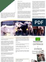 Caprinos y Ovinos Una Alternativas Para El Pequeo Productor