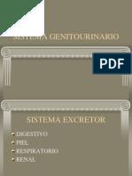 Clase 6 Sistema Genitourinario