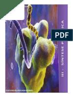3_sintese_proteínas