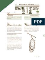 platymiscium_pinnatum.pdf