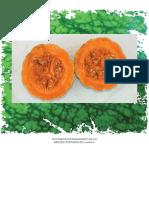 Documento_de_diagnostico_de_las_especies_cultivadas_de_cucurbita_l.pdf