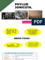 Phylum Zigomicota