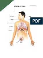 Rotular Sistema Respiratorio