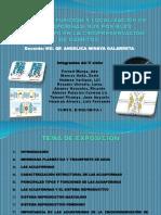 Estructura, Función y Localización de Las Acuaporinas