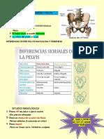 Apuntes p2 Cadera, Pelvis, Tobillo, Tibia, Perone