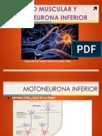 Motoneurona Inferior