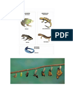 Fotos Anfibios - Metamorfosis