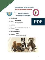 INFORME-DE-CARBOHIDRATOS 06- 07.docx