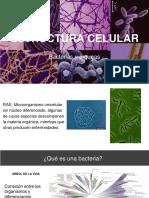 Estructura Celular_ Bacterias