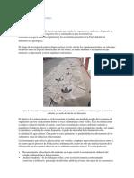 Ecologia y Paleocologia
