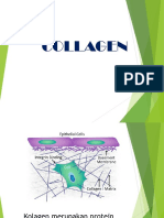 Collagen Presentasi