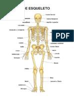 Anatomia del esqueleto.odt