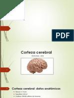 CORTEZA CEREBRAL2018