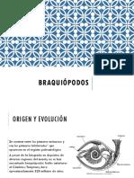 BRAQUIÓPODOS