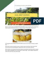 SPESIAL..!Hp/Wa 0822-2022-8118, Durian Bawor, Bibit Durian Musang King Medan,