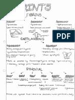 Anatomy Summaries