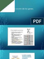 6. Mejoramiento Genético.pptx