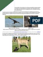 Especiación y Especies.docx