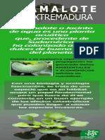 [Exposicion] Camalote en Extremadura