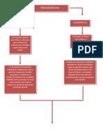 103741927-Mapa-Conceptual-de-Las-Rutas-Metabolicas.docx