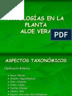 PATOLOGIAS DE LA SABILA (ENFERMEDADES).ppt