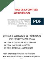 7 hormonas corticosuprarrenales .pptx
