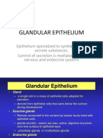 Glandular Epithelium (1)