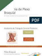 Anatomía de Plexo Braquial