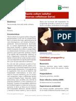 Ficha Taenia solium.pdf