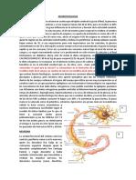 neurofisio 1