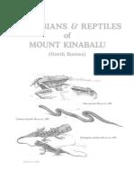 kunci identifikasi amfibi dan reptil