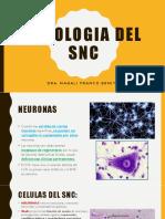 Teoria Patologia Del Snc