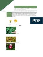 Estimulos de Las Plantas