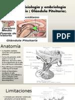 Anatoma Fisiologa y Embriologa de La Hipfisis1 160921084451 (1)
