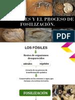 Los Fósiles y El Proceso de Fosilización