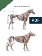Miologia Prática - 03 - Equino e Cão