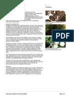 CalophyllumInophyllum-TamanuOil