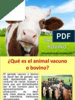 animal vacuno