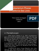 Arcanobacterium Phocae