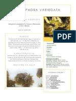 Identificação Das Algas