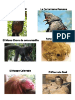 Imangenes Animales en Peligro de Extincion - Peru