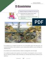 El Ecosistema, Niveles de organización en Ecología, Hábitat y Nicho Ecológico,Cadena Alimenticia, Hábitat y Nicho Ecológico