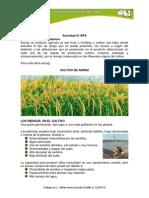 actividad 01 BPA.pdf