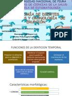 Anatomia de Los Dientes y Cronología de Erupción Original