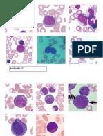 Granulocytic Series