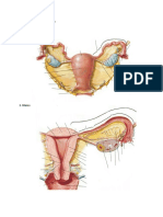 1. Ovarium And