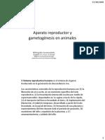Clase 20- Aparato Reproductor y Gametogénesis en Animales