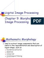 Morphological (1).pdf
