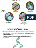 Replicación ADN Monse