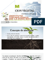 Nutricion Vegetal Ppt